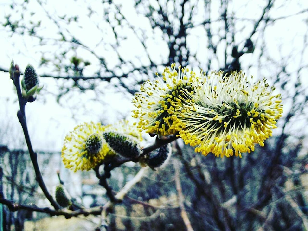nature, flower, growth, yellow, beauty in nature, day, focus on foreground, one animal, no people, outdoors, fragility, close-up, insect, plant, animal themes, tree, branch, freshness, flower head