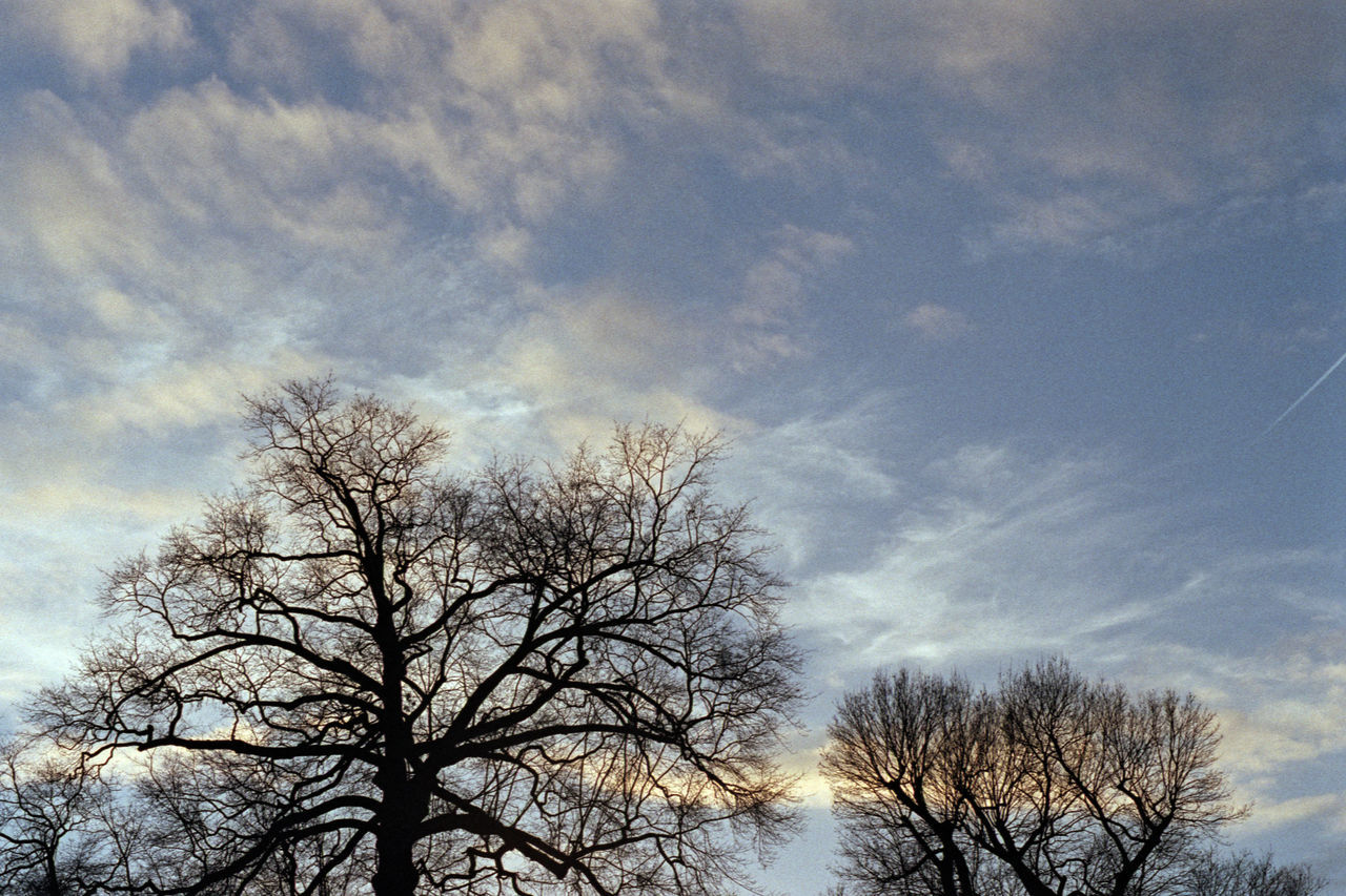"Walking through ""Oranjepark"" 35mm Film AgfaPhoto Vista Plus 200 Analogue Photography Autumn Blu Sky Blue City Clouds Color Negative Colorful Dramatic Sky Film Flora Nature Oranjepark Park Season  Silhouette Sky Tree"
