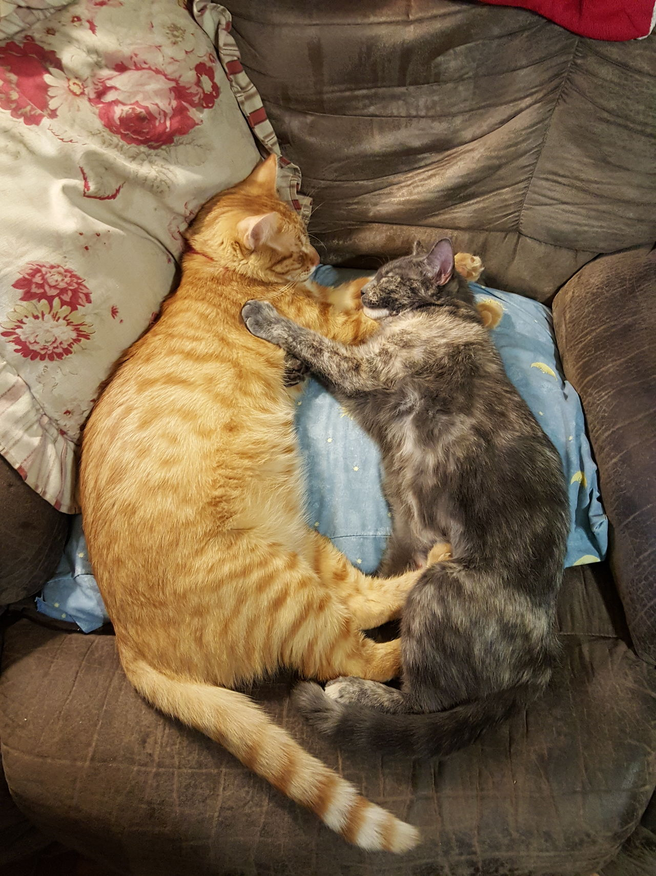 I luurve you bro Cats Catsofinstagram Cats Of EyeEm Cute Animals The Purist (no Edit, No Filter) Samsungphotography Eyeemphoto Cat Nap Two Is Better Than One