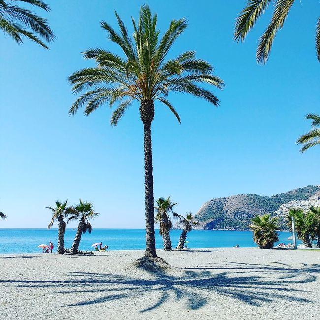 Azure Sky Azureblue Beach Coastline Palm Shadows Palm Tree Sand Sea Shore Vacations