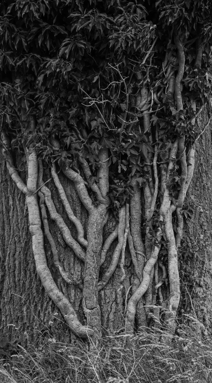 tree trunk, tree, nature, root, textured, growth, no people, day, outdoors, beauty in nature, close-up