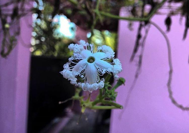 Macro With Lumia 1520 Flower Nice Lumia1520