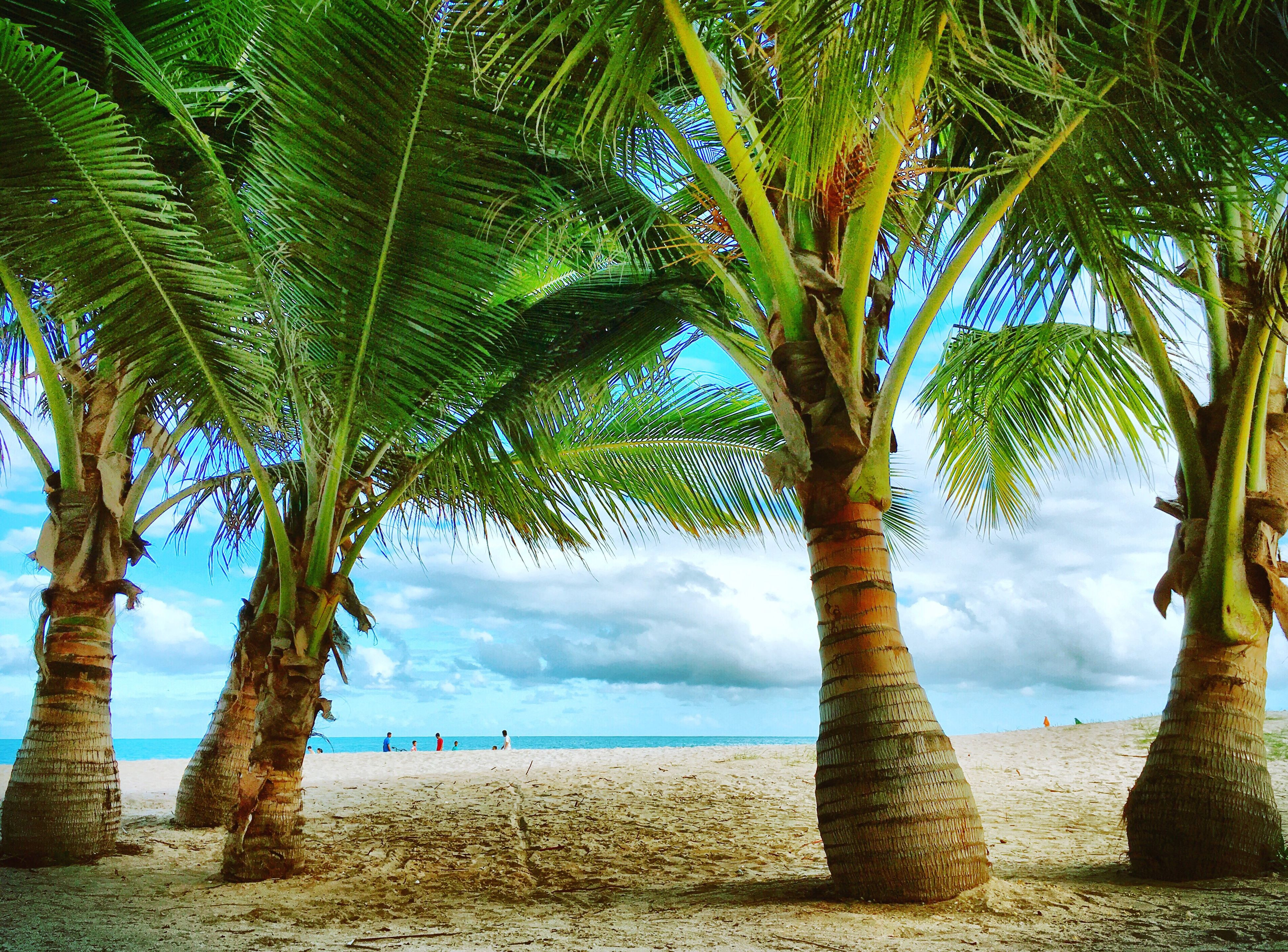 tree, palm tree, tranquility, sea, water, tranquil scene, beach, scenics, tree trunk, beauty in nature, sky, nature, horizon over water, growth, shore, idyllic, branch, sand, vacations, outdoors