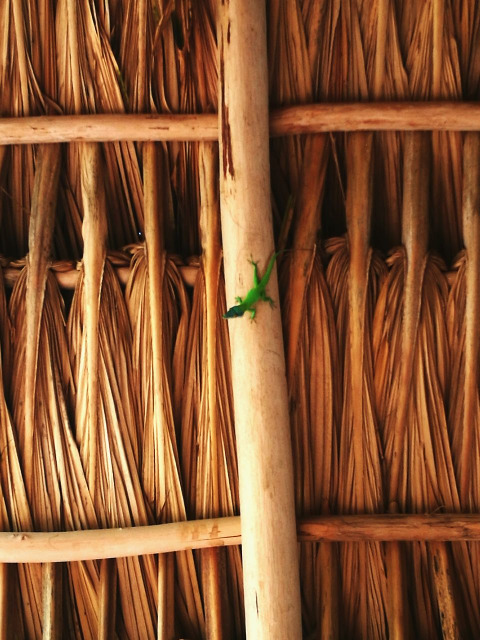 bamboo, bamboo - plant, growth, bamboo - material, no people, bamboo grove, plant, indoors, nature, leaf, day, close-up, beauty in nature, animal themes, freshness