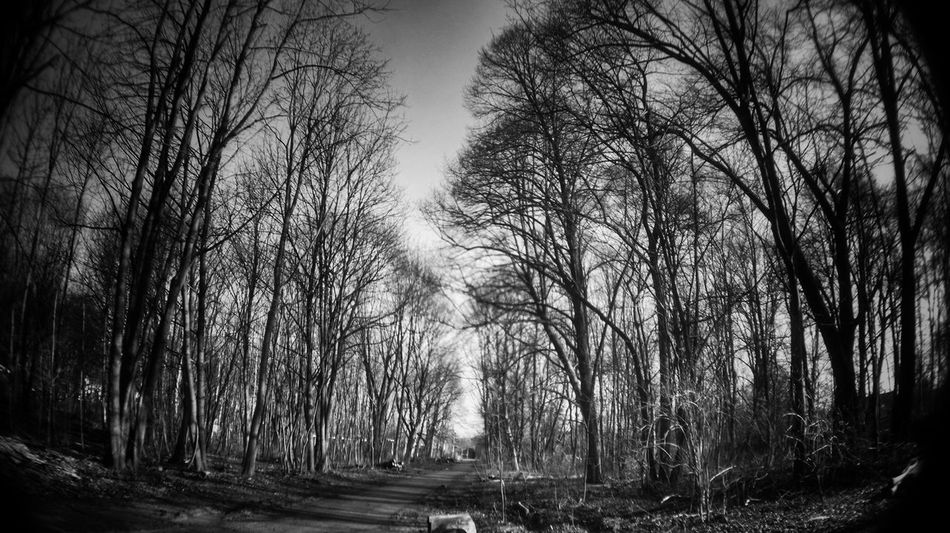 | forest in black | Nature Photography Landscape_photography Forest Blackandwhite Photography Blackandwhite Check This Out Perspective Dennis Knorr Hannover Emeyebestshot Fisheye WoodLand Dramatic Mistic Forest Mistic The Great Outdoors - 2016 EyeEm Awards Nature's Diversities