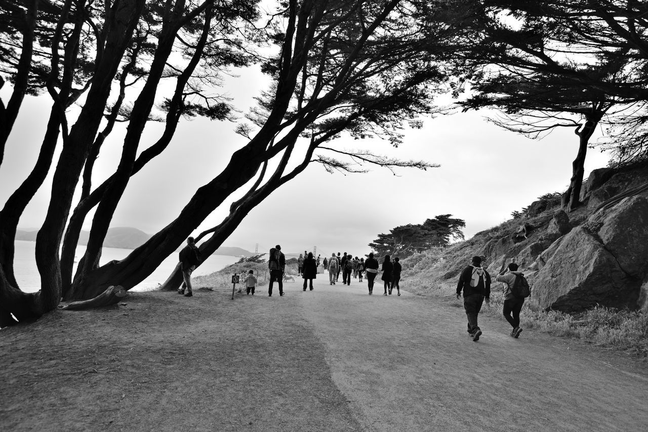 Sites Along Coastal Trail To Eagle's Point 10 San Francisco Ca Coastal Hiking Trail My Hiking Group Outdoor Afro Wind Swept Cypress Trees Scenic Views Rocky Shoreline Dense Fog Oceanfront Golden Gate Bridge Ahead Seascape Seaview Seashore Treacherous Waters Black & White Black And White Black And White Collection  Monochrome Black And White Photography Landscape Landscape_Collection Landscape_photography