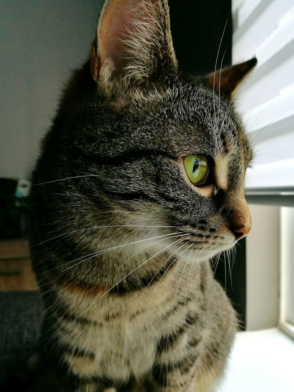 Pets Close-up Domestic Cat Cats Of EyeEm Lazysunday Staring Out Of Window One Animal