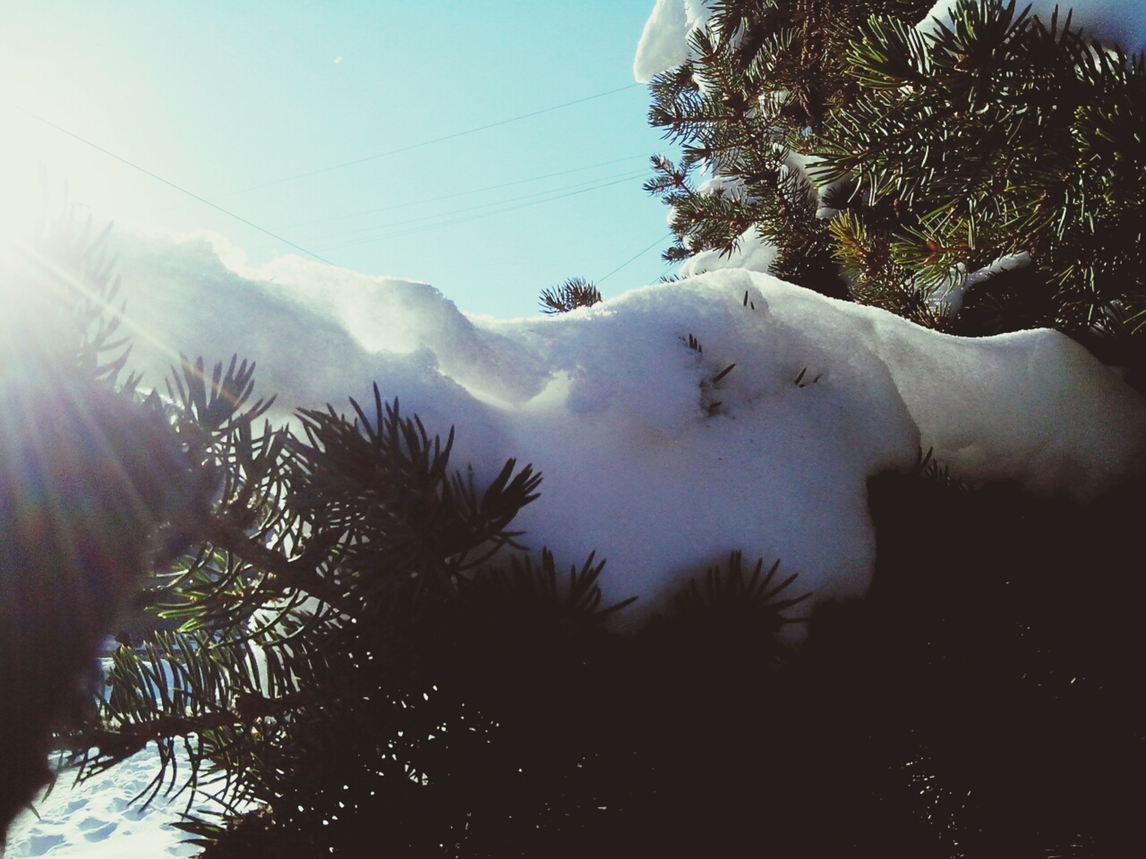 tree, mountain, sky, tranquility, lifestyles, leisure activity, men, nature, tranquil scene, beauty in nature, scenics, clear sky, palm tree, sunlight, silhouette, low angle view, day, unrecognizable person