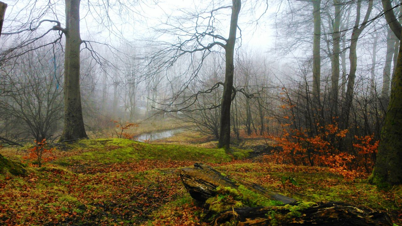 Fall Beauty Beautiful Nature A Walk In The Woods