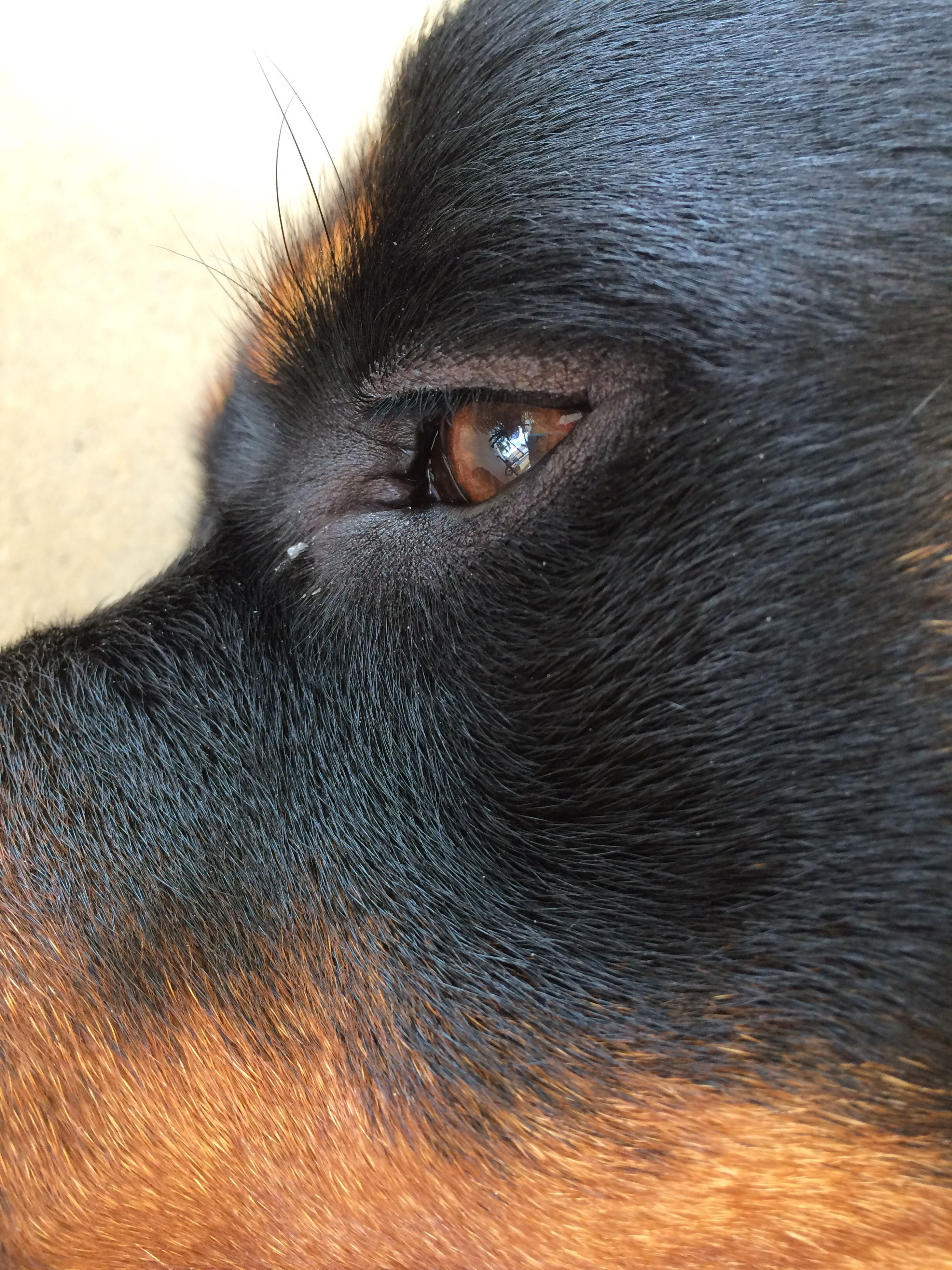 one animal, animal themes, pets, domestic animals, mammal, animal head, dog, close-up, animal body part, animal eye, part of, looking away, animal hair, portrait, zoology, no people, black color, focus on foreground, outdoors, day