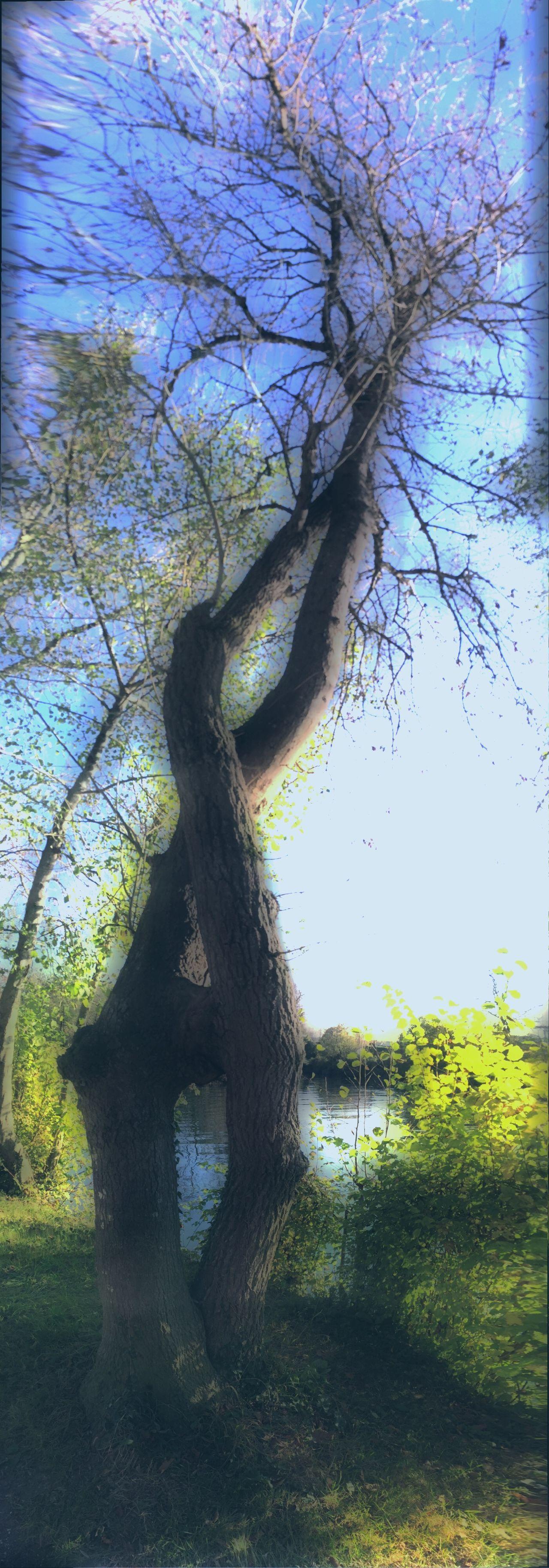 L'AMOUR de LA NATURE 🌳🌳 Sur Les Chemins Arbre Au Bord De L'eau Amour Nature EyeEm Nature Lover