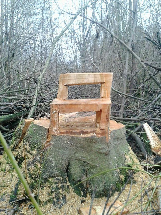 Baum-Stuhl im Wald gesichtet !! Wood - Material Unterwegsunddraußen Holz Kunst WoodChair Kunst Ist Was Du Daraus Machst Im Wald Lol :)