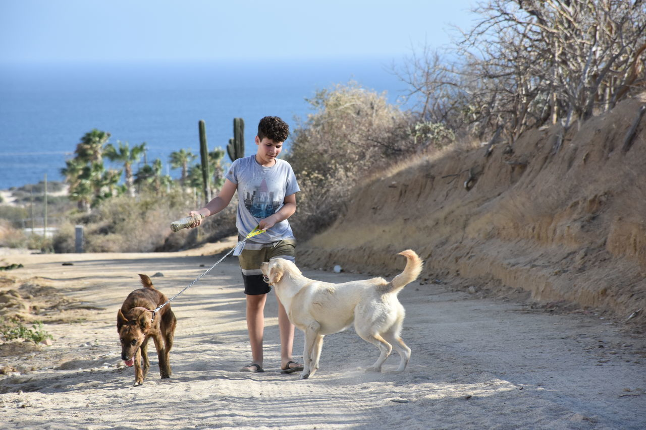Adolescent Baja California Sur Cactus Cardo Dogs Harda Workers Kid Mediterranean  Mexican Labors Street Light Surface Level Tezal