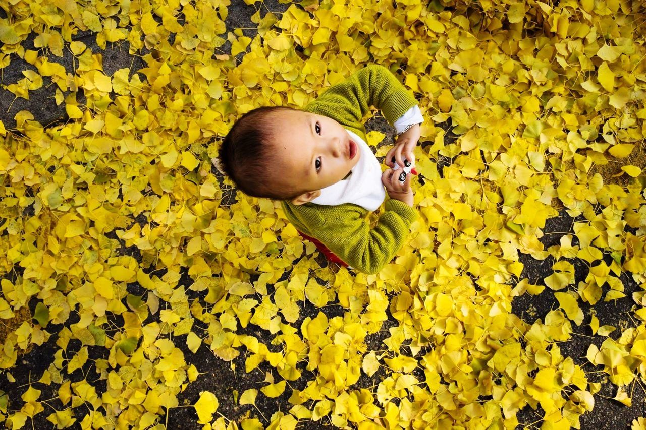 High Angle View Of Child On Autumn Leaves