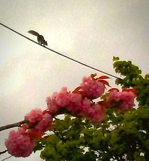 Pink Color Think Pink! Squirrel!!! Outdoors Nature Growth Healthy Eating Just Kidding Close-up Art Is Everywhere EyeEm Gallery Original Experiences Eyeem Market Getty Images Photography Themes Portrait Snapshots Of Life Pacific Northwest  Focus On Foreground Power Lines Against Sky Out And About Looking For Nuts Squirrely Walking A Tightrope No People Break The Mold TCPM EyeEmNewHere Live For The Story Mobility In Mega Cities