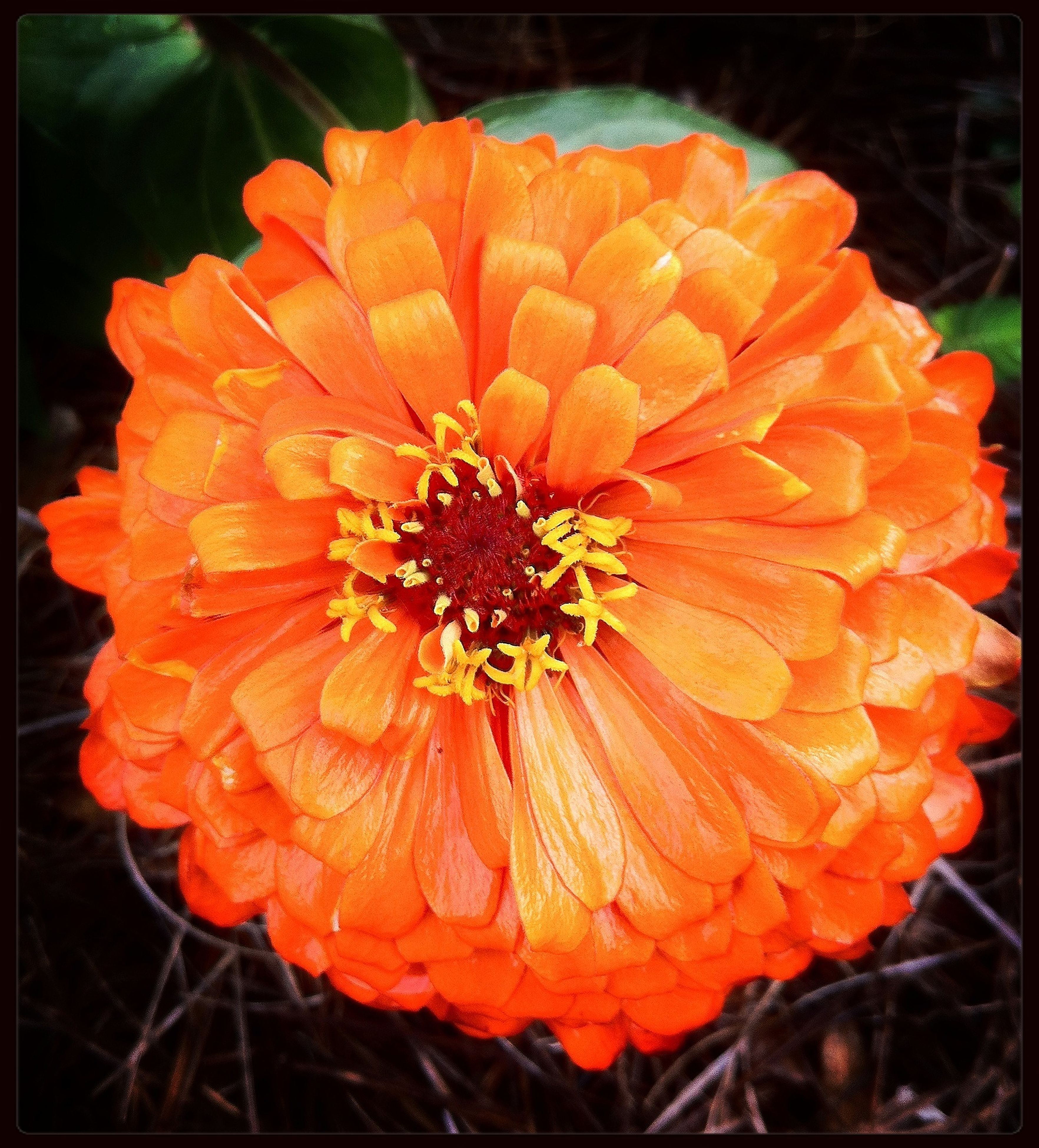 flower, petal, flower head, freshness, fragility, close-up, orange color, beauty in nature, single flower, growth, blooming, pollen, nature, red, focus on foreground, transfer print, auto post production filter, plant, stamen, in bloom