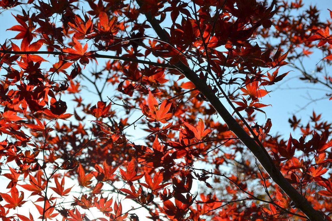 Autumn Iwate Nature No People Outdoors Tohno(遠野) 岩手 秋 紅葉