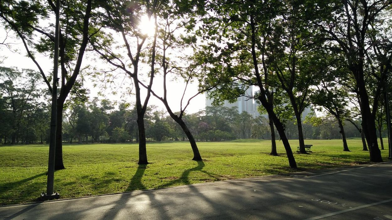 Tree Outdoors Nature Growth Day Sunny Day Sunshine ☀ Sunlight Beauty In Nature Sky No People Grass Green Grass 🌱 Park Outdoors Photograpghy  Refreshment Shadows & Lights Running In The Park Morning Light Freshness City Park Bangkok Thailand.