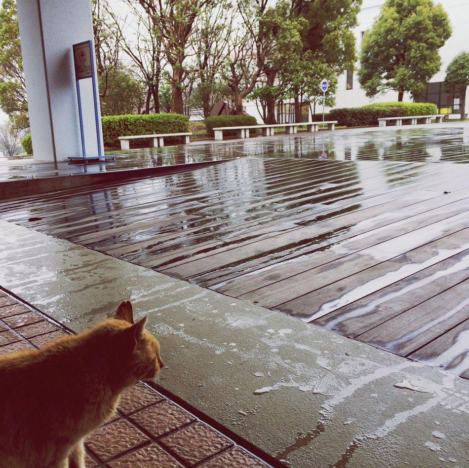 rainy day... Cat Rainy Day Rainy Days Hello World