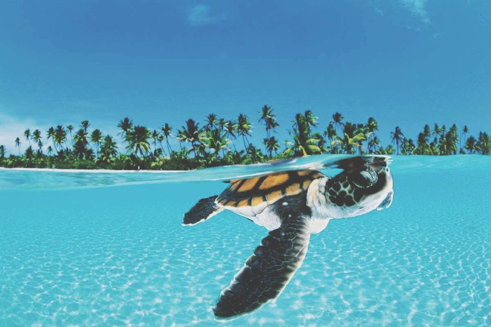 Love My Turtles Turtles Seaturtles Islander Saipan Cnmi