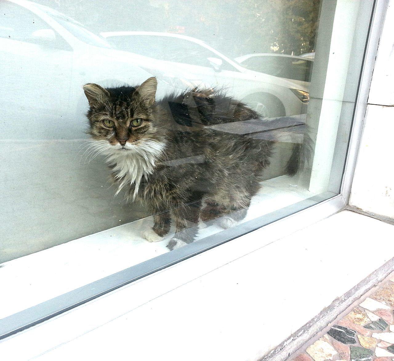 Domestic Cat Pets Domestic Animals Animal Themes Mammal Feline No People One Animal Indoors  Sliding Door Leopard Day