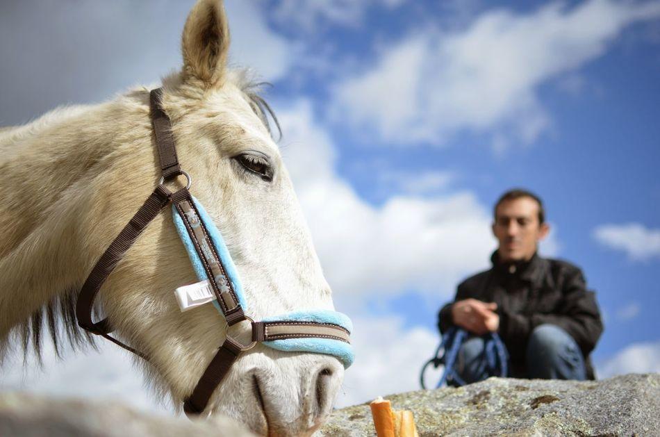 Beautiful stock photos of donkey, Animal, Bridle, Domestic, Donkey