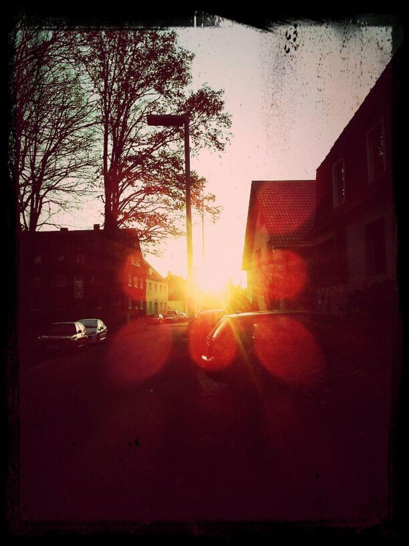Sunset Sky Trees BTM Mvn