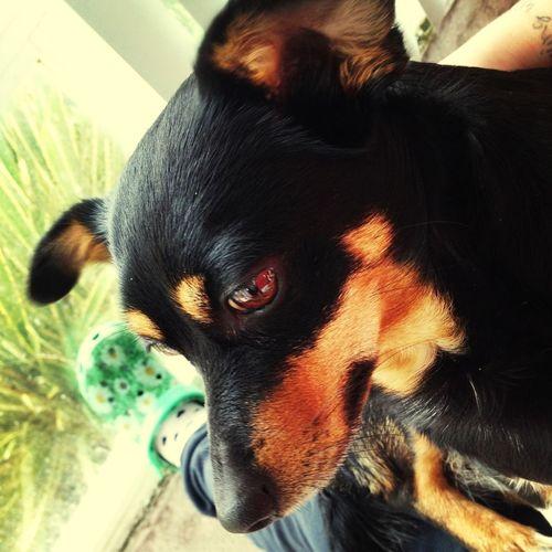 My baby Luna