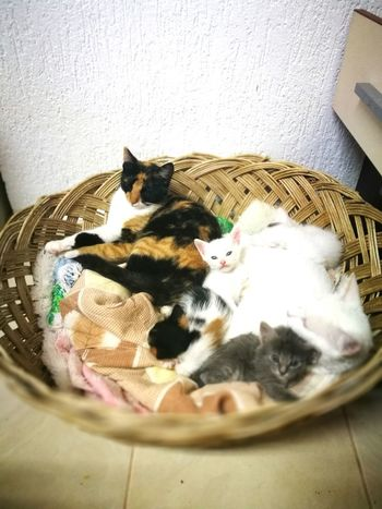 Cat Sleeping Animal At Home Animal Themes Pets Kitten Domestic Cat Catfamily