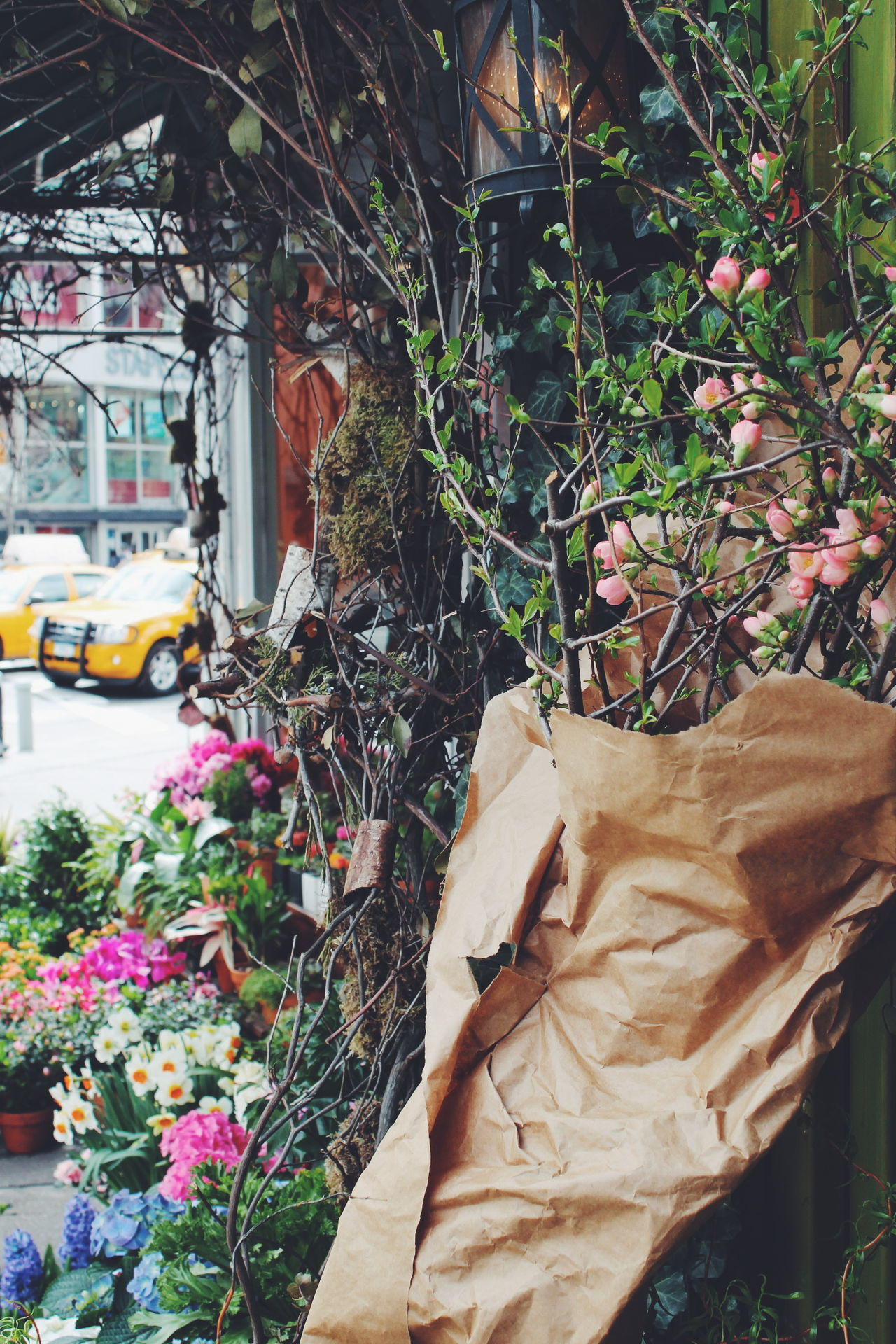 Spring time in New York City Abundance Autumn Branch Change Day Destruction Dirty Front Or Back Yard Green Green Color Growing Growth Shop Around The Corner Leaf Leaves Plant Potted Plant Urban Spring Fever NYC Greenwich Village Manhattan Flower Shop Spring Spring Flowers Springtime