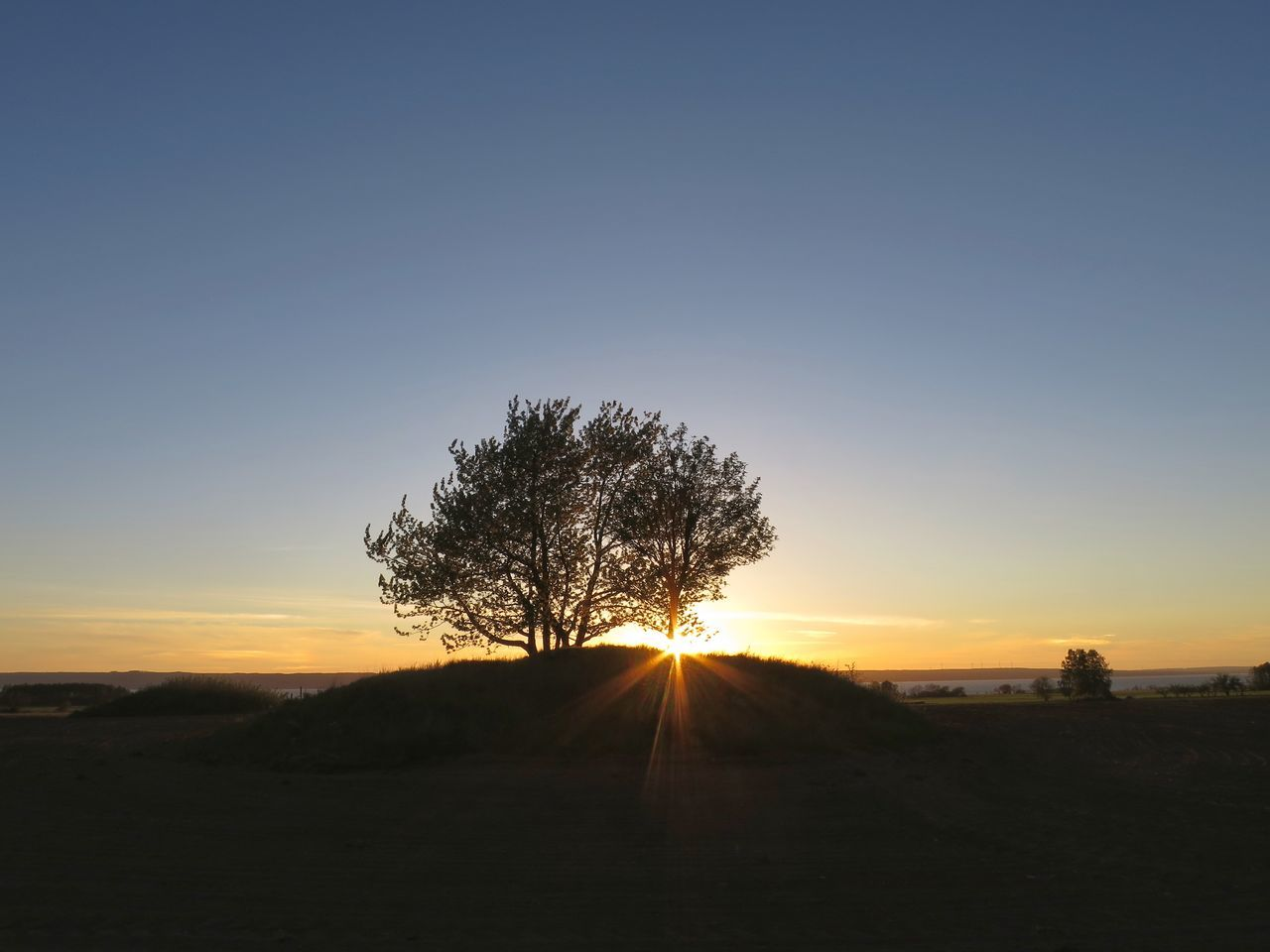 Beauty In Nature Sunset Nature Sunlight Tree Silhouette Landscape Outdoors Scenics