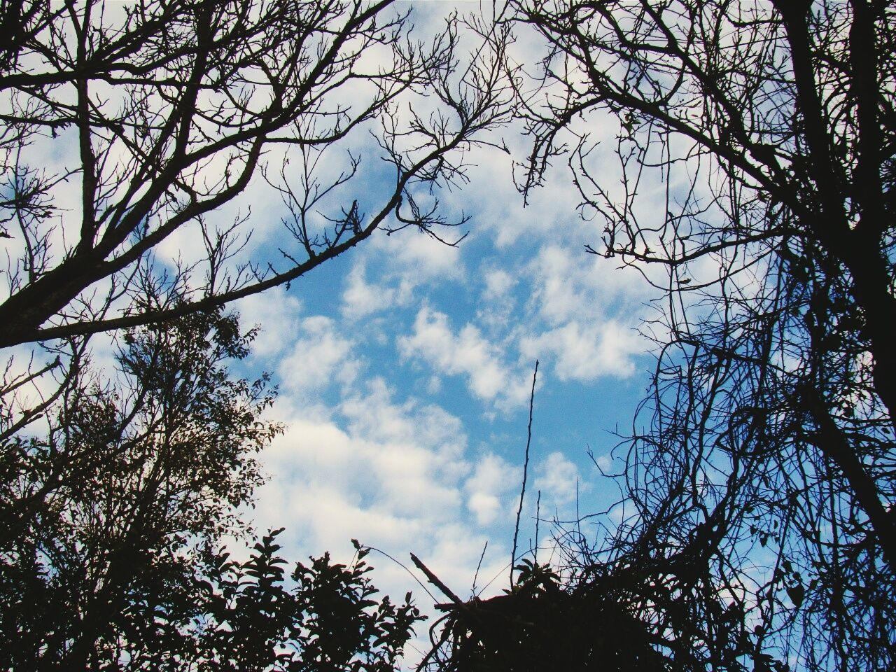 tree, low angle view, sky, branch, nature, day, cloud - sky, no people, growth, beauty in nature, outdoors, forest