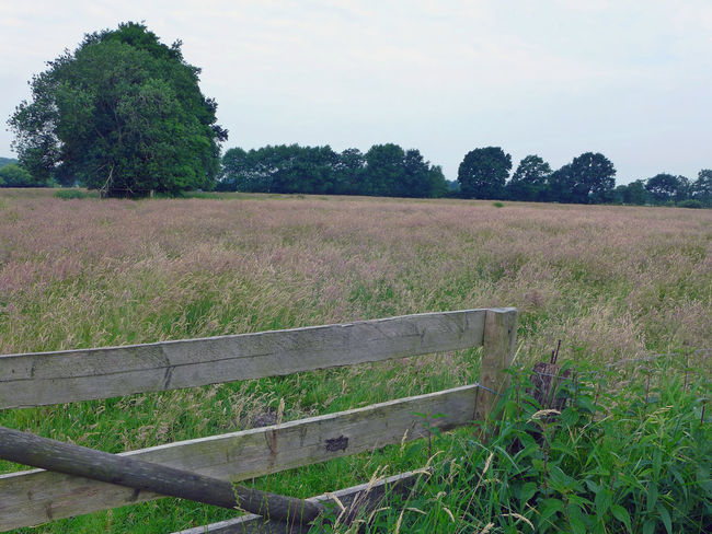 Beauty In Nature Farm Life Fence Field Gate Grass Grassland Landscape Meadowlands Nature Tranquil Scene Tranquility Wooden Fence