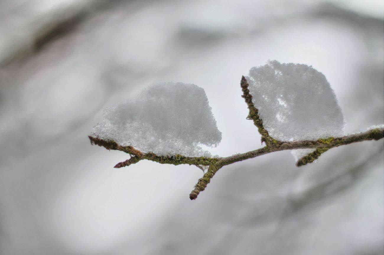 Deepfreeze Snow ❄ Nieve Frio ⛄❄ Frio Invierno Winter Equilibrio Hermoso