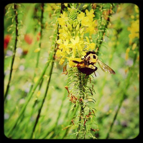 Bumble Bee NX2000