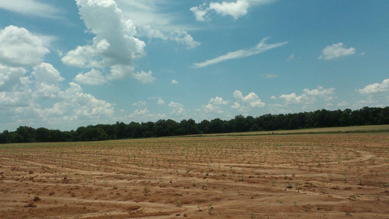 Landscape Farm Alabama Countryside Field