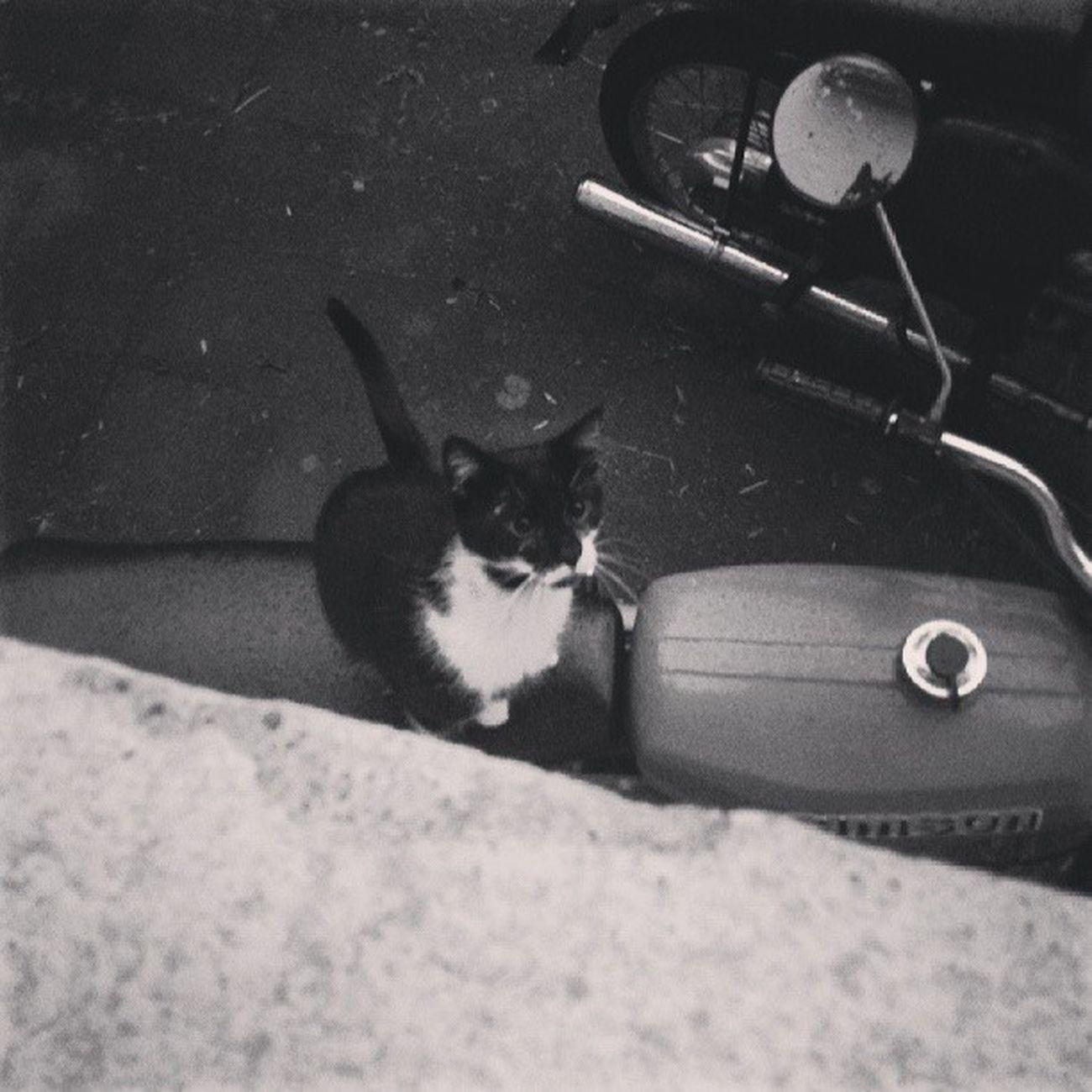 Hui, da schaut aber eine nette Überraschung durchs Fenster - ein sehr seltener Wg -Gast: Jeffrey :) Evening Blackwhite Blackandwhite cat cats motorbike Catcontent catstagram catsofinstagram Caturday caturdayeveryday fluffeveryday fluffweekly instafluff fluff followme follow instafollow instakitten kitten tagsforlikes t4l outside home