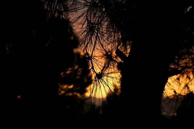 Focus Object Silhouette Nature Outdoors Beauty In Nature Bare Tree Photography Taking Photos Barcelona Travel Canon Eye4photography  First Eyeem Photo EyeEm Best Shots Canonphotography Canonitalia Eyeemphoto Adventure Sunset Sunset_captures Colors Colour Of Life Illuminated Streetphotography EOS