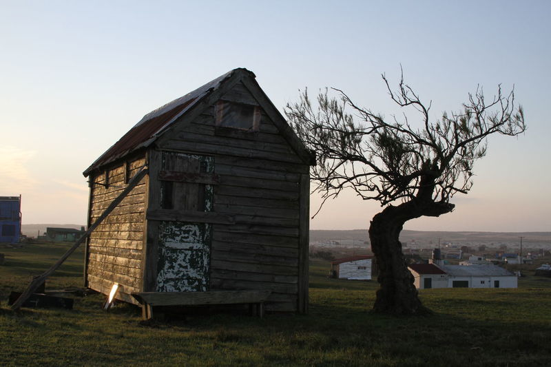 Abandoned Bare Tree Built Structure House No People Wood - Material Cabo Polonio Uruguay