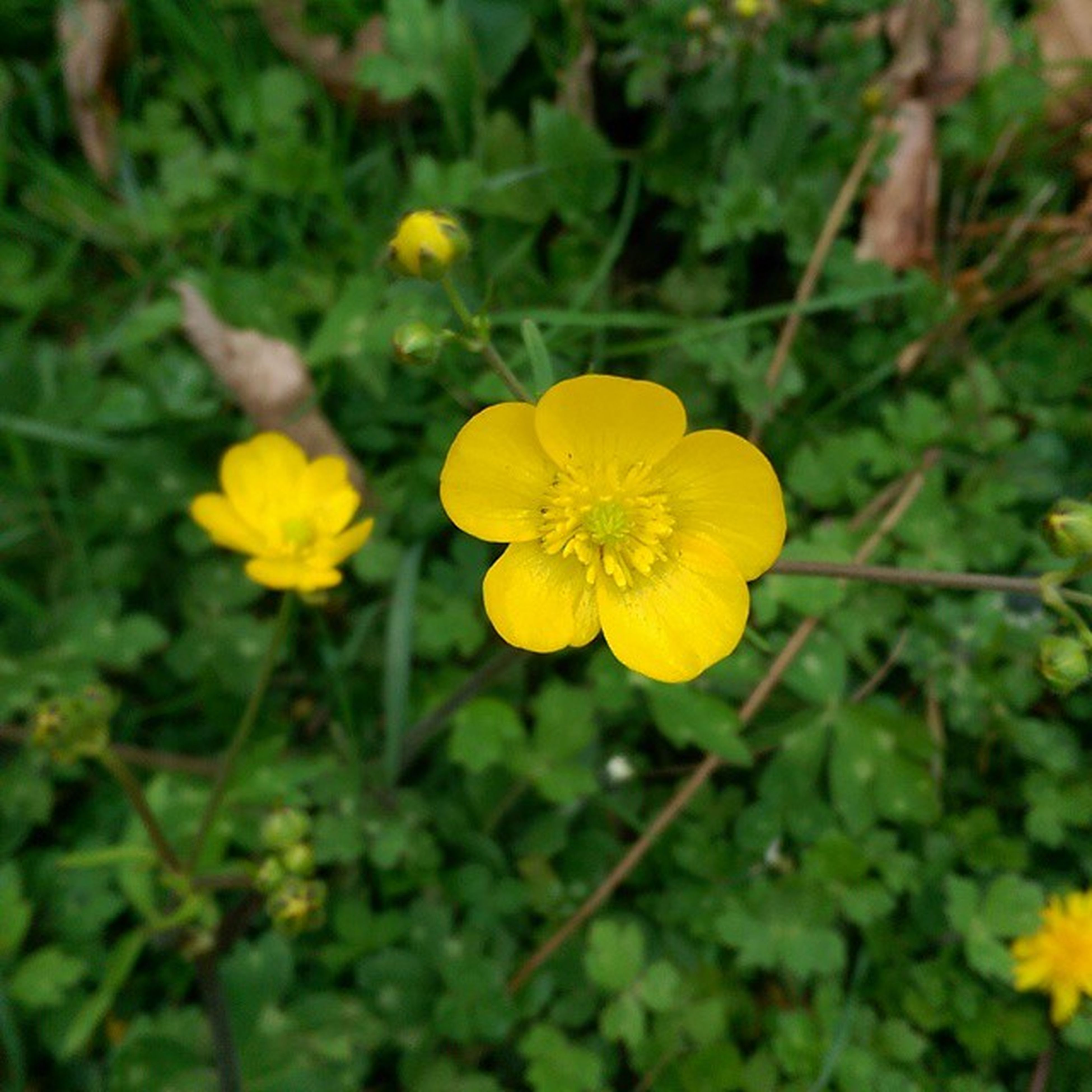 flower, petal, yellow, freshness, fragility, flower head, growth, beauty in nature, blooming, focus on foreground, nature, close-up, plant, in bloom, stem, pollen, blossom, day, outdoors, single flower