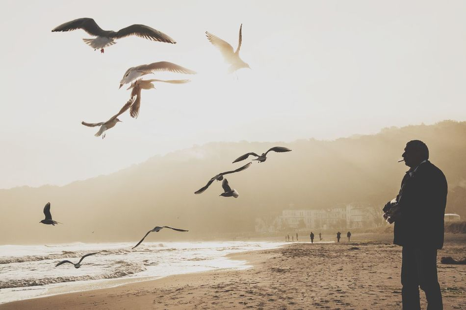Flying Bird Beach Sea Animals In The Wild Full Length Sand Men Day Animal Wildlife Outdoors One Person Vacations Nature Sky Adult One Man Only People Flock Of Seagulls Seagulls Rügen Lovers Island