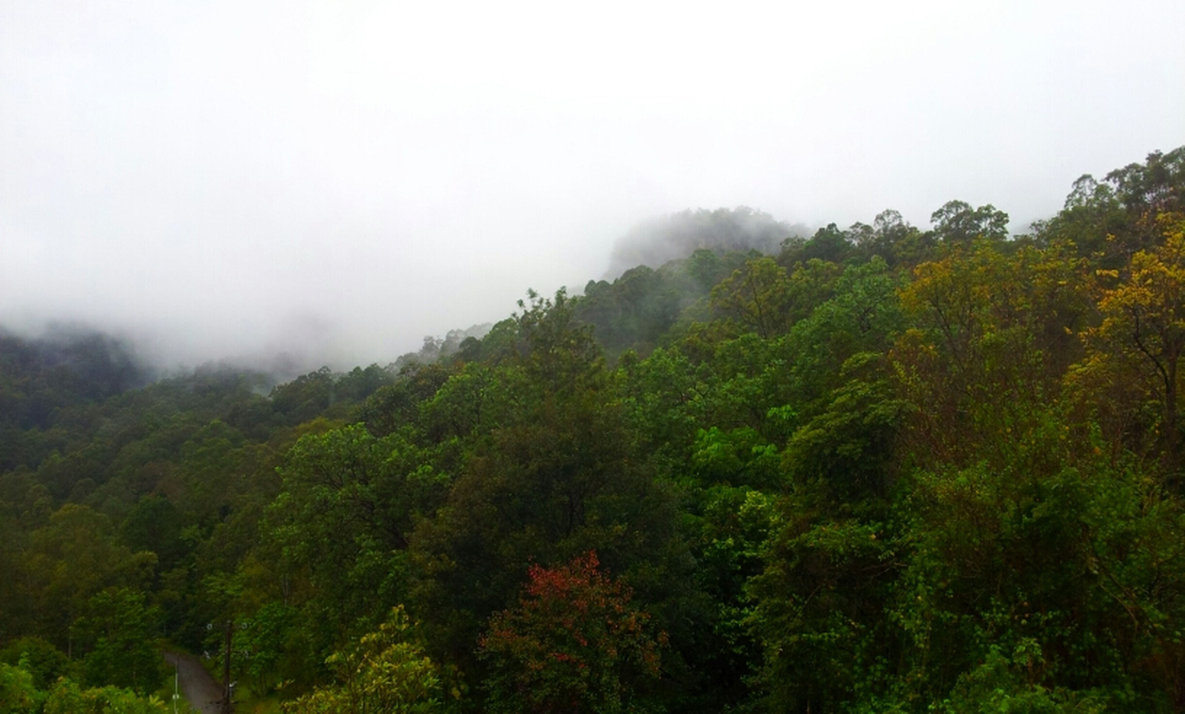 tree, tranquil scene, mountain, tranquility, scenics, beauty in nature, fog, nature, growth, green color, foggy, lush foliage, landscape, non-urban scene, forest, sky, weather, idyllic, day