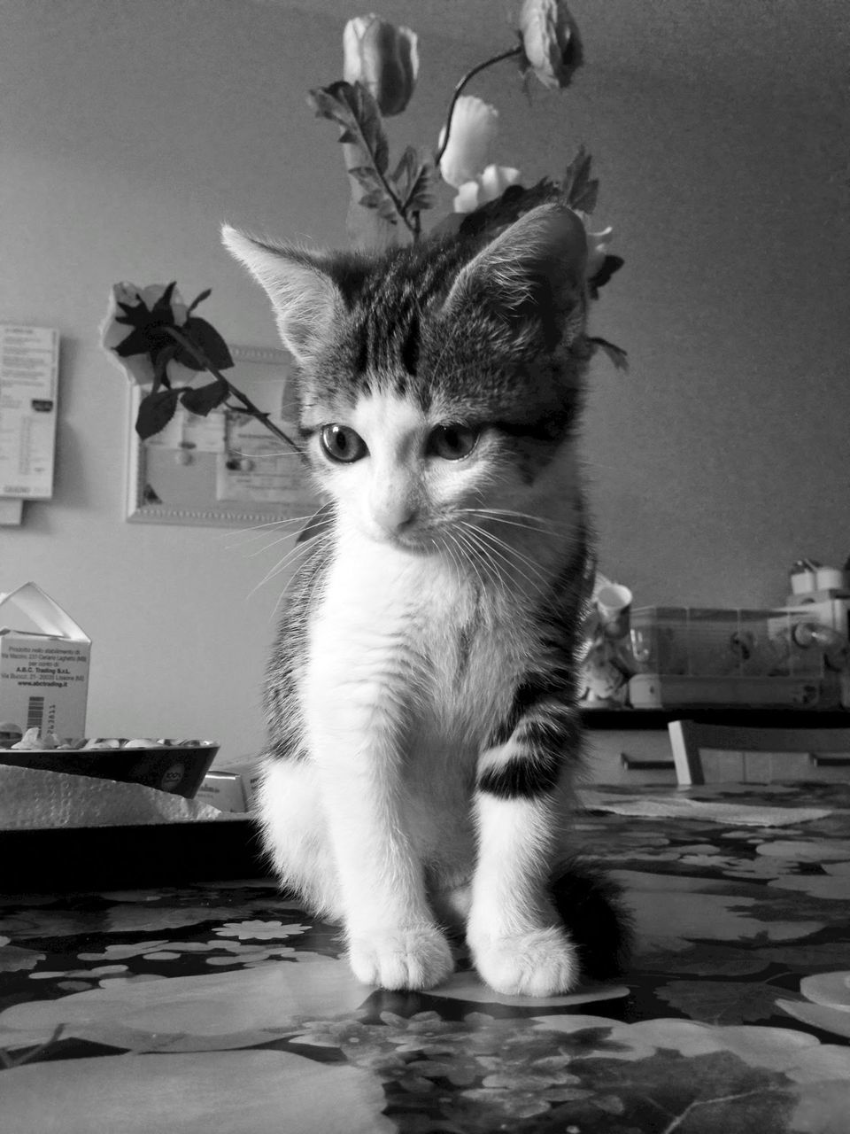 one animal, animal themes, pets, domestic animals, looking at camera, indoors, portrait, domestic cat, mammal, no people, close-up, day