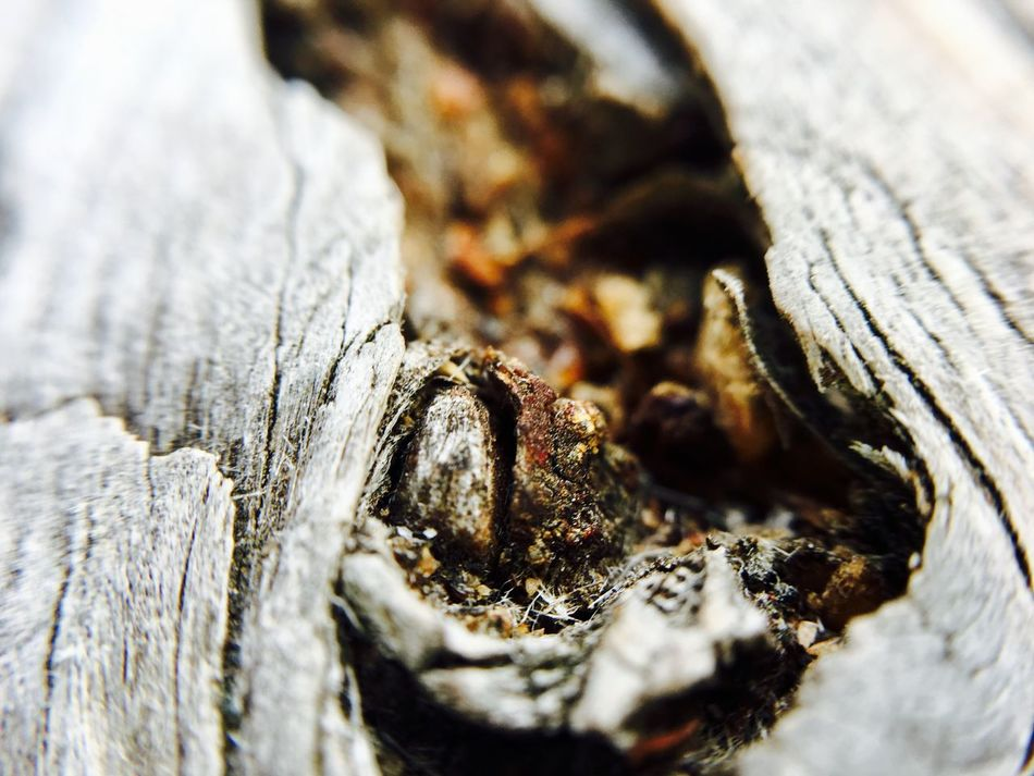 Close-up Textured  No People Selective Focus Wood - Material Tree Trunk Day Outdoors Nature Tree Wood Wooden Holz Holztextur Holzbank Loch  Nature Photography Eyeemphotography EyeEmNewHere Focus On Foreground Nature Low Angle View EyeEm Selects EyeEm Best Shots EyeEm Nature Lover