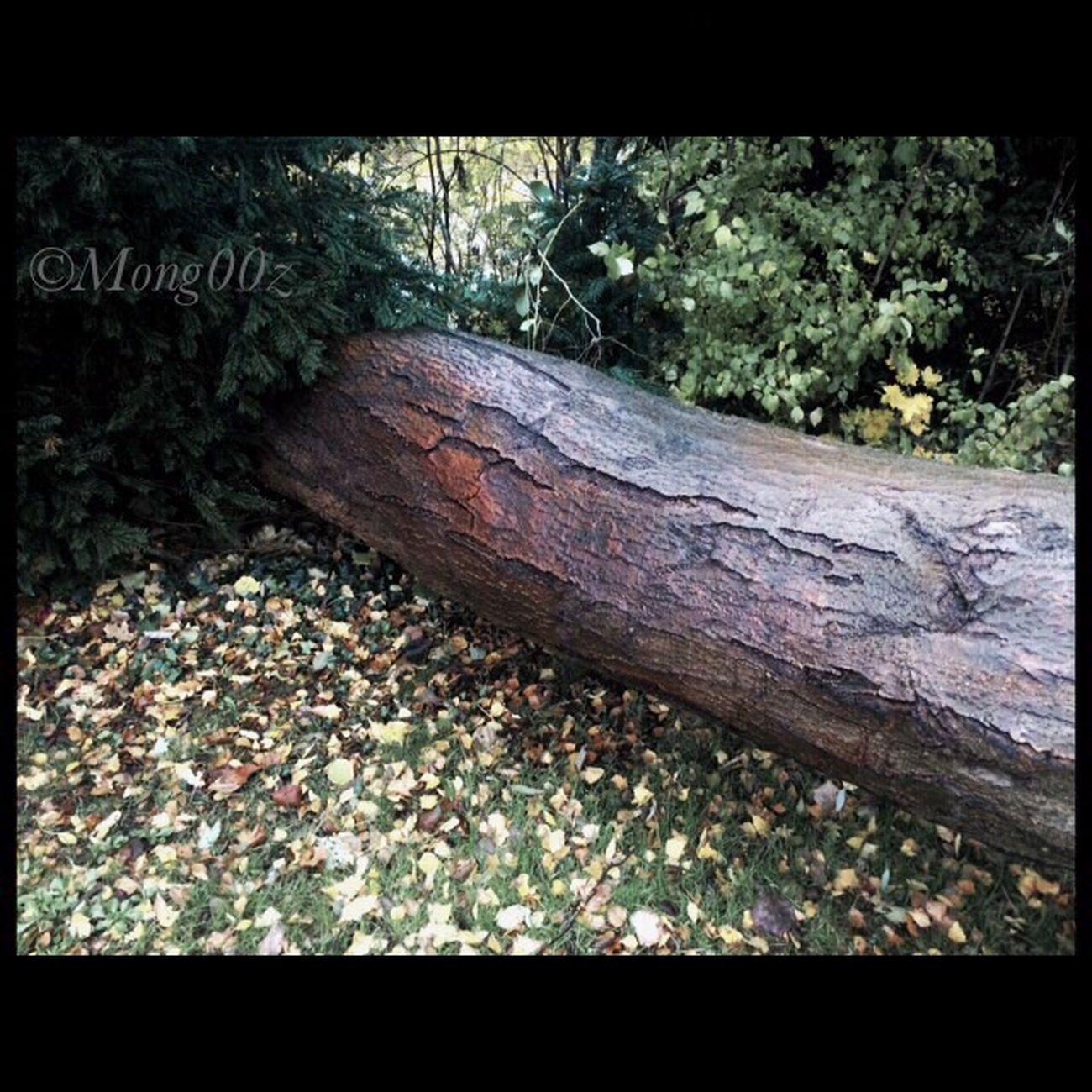 Tree Nature Autumn Fall Fallen Tree No Filter Tree Bark
