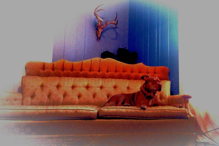 My love on his throne I Love My Dog Hanging Out Hello World Enjoying Life Woofiesaturday
