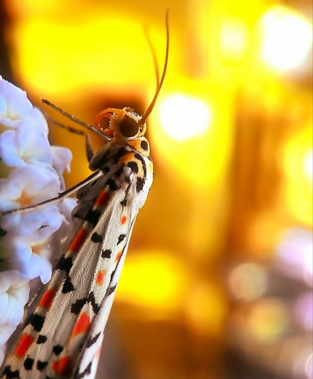 insect, close-up, one animal, animal themes, animals in the wild, focus on foreground, no people, day, outdoors, nature