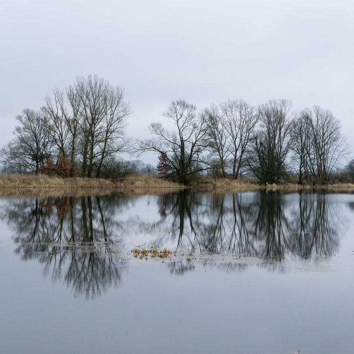 Landsscape photography in the area of Oderbruch in Germany. Reflection Trees Bare Tree Beauty In Nature Day Group Of Trees Lake Leaves Nature No People Outdoors Reflection Scenics Sky Standing Water Tranquil Scene Tranquility Tree Water Waterfront