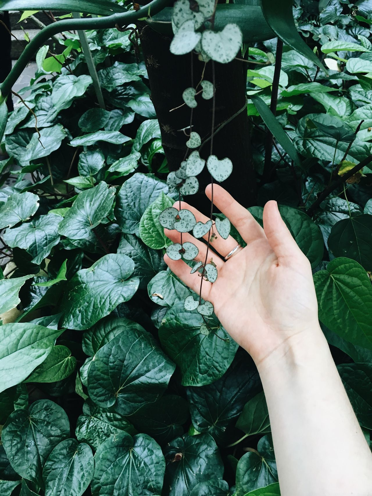 Jewellery Human Hand Leaf Human Body Part Plant Growth Green Color Outdoors Freshness Real People Lifestyles Nature EyeEm Nature Lover