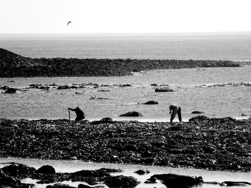 Coastline Cockle Pickers Seaside Coast Northumberland Uk Shades Of Grey